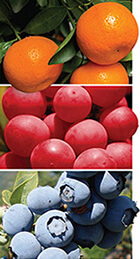 HIGH QUALITY FRUITS LEDAROL CROPSCIENCE AGRICULTURAL AGRICULTURE