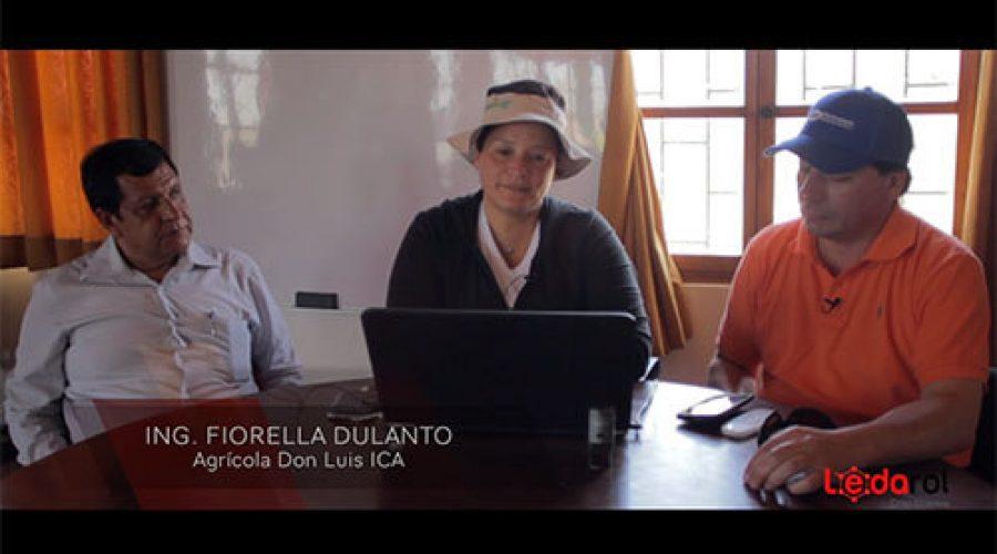 Technical Comment campaign 2017/18 Table grape – Ica, Peru.